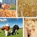 Agri trends: Grains, oilseeds, livestock and fibres