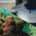 3D-printing tech for the marine world could save coral reefs