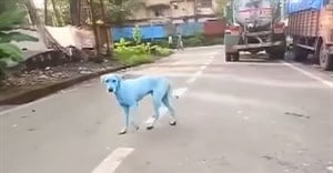 Indian factory shut for dumping dye after dogs turn blue