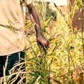 AfDB wants greater focus on implementation, as African Green Revolution Forum begins in Abidjan