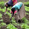 Integrated policy approach needed to ensure sustainable food systems