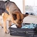 Heroin, counterfeit goods bust at King Shaka airport
