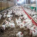 Department working to control avian flu outbreak