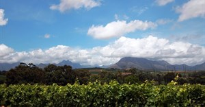 Seven ways wine farms can protect SA's natural resources