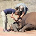 WWF project sees crash of black rhinos moved to new location to help bolster numbers