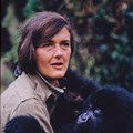 National Geographic premieres miniseries, Dian Fossey: Secrets in the Mist