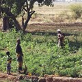 AIDmonitor to analyse funding flows for development in food and agriculture-related sectors