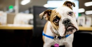 Ca-nine to five: One in five workplaces allow pets in the office