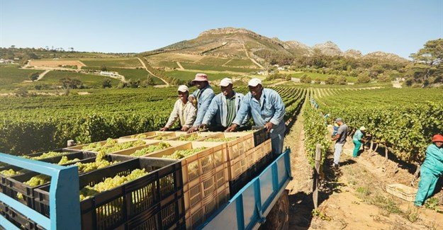 New programme to address modern slavery in SA's wine and fruit industries