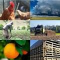 #BestofBiz 2017: Agriculture
