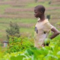 Rwanda's agricultural revolution is not the success it claims to be