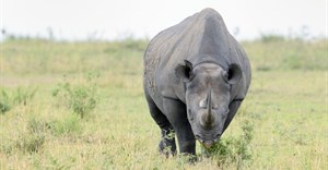 The hi-tech fight back against rhino poachers