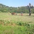 Tapiwa Zvakavapano via  - Villagers working on the land in Bedza Village, Buhera, Zimbabwe