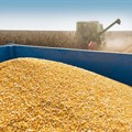 SA maize: Possible exportable surpluses