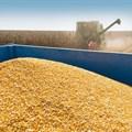 SA maize: Possible exportable surpluses
