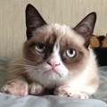 I haz wins: Grumpy Cat in $710,000 court payout