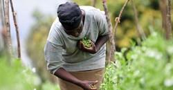 2DU Kenya 84 via