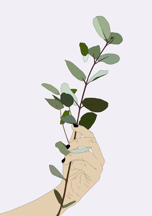 Illustrations | Botanical