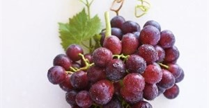 New SA table grape launched in Berlin
