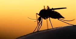 """Release of sterile mosquitoes a """"publicity stunt"""""""