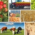 #Budget2018: Efficient use of public funds essential to optimise SA's agricultural output