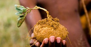 San pioneer new farming techniques to achieve greater food security