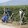 SIZA sets gold farm sustainability standard for SA