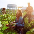 How to put the youth back in agriculture