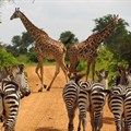 Community-based wildlife conservation is bringing success to Tanzania