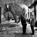 The elephant in the room and the 'Big 5' threats to the media agency