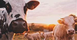Partnership beefs up veterinary services across Africa, Asia and Middle East to tackle animal disease
