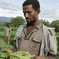 Applications for Fall Armyworm Tech Prize open