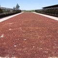 Raisins drying under the Northern Cape sun. Image Supplied