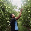 Watch: Smart water use in SA apple orchards