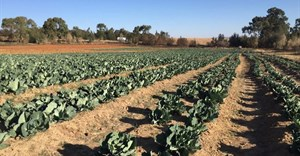 Obstacles facing a young black farmer in South Africa: a personal story