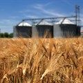 South African wheat production under the spotlight