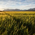 No need to panic over land expropriation without compensation