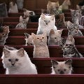This 'Kitten Kollege' YouTube series is the cutest thing you'll watch today