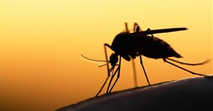 Why Kenya isn't winning the war against malaria in some counties