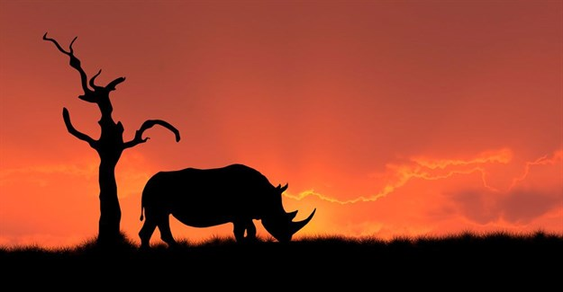 SA policeman, former army general among those arrested for alleged rhino poaching