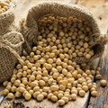 SA soya bean imports set to decline