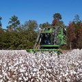 Farmers hail cotton auction system