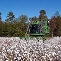 Farmers hail cotton auction system