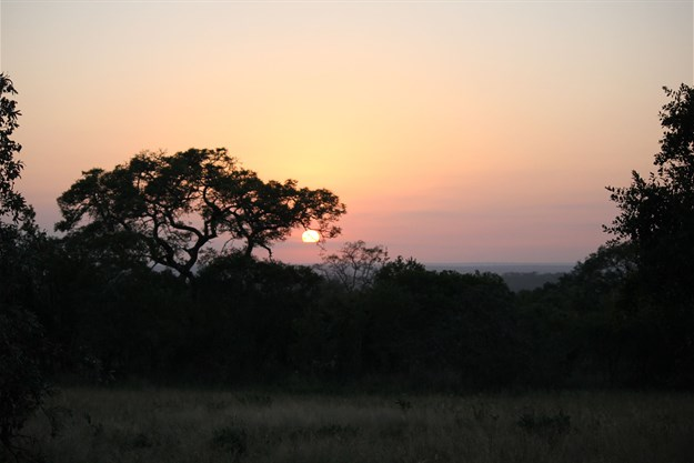 Talking trees and mating leopards: Go on a nature escape in the Sabi Sands