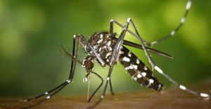 Rift Valley Fever reported in Free State