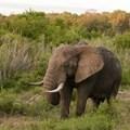 How to break the impasse between opposing camps in ivory trade debate