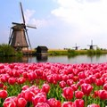 Is Bitcoin the digital version of the tulip bubble?