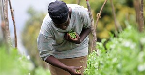 Helping smallholders participate in the rise of agribusiness in Africa