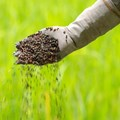 Zimbabwe youths champion organic fertiliser in new social venture
