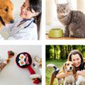 Is pet 'parenting' driving SA industry growth?